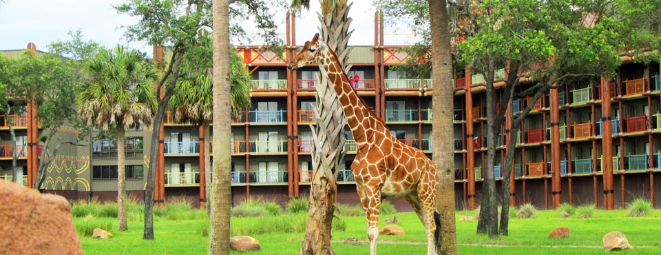 Giraffe at the Savanna in Disney Animal Kingdom Lodge 960