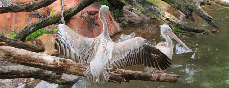 View of a Bird with wings spread over a creek at the Disney Animal Kingdom Lodge at Disney World