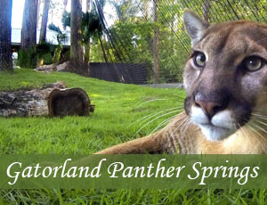 Panther Springs Exhibit at Gatorland with Neiko and Lucy