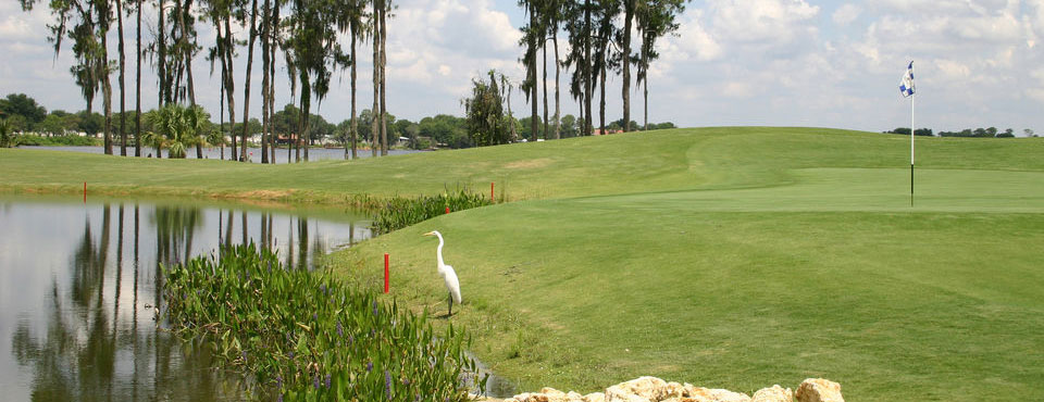Beautiful view of a golf green overlooking the water at the Holiday Inn Orange Lake Resort in Kissimmee Fl