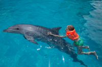 st-augustine-and-dolphin-experience
